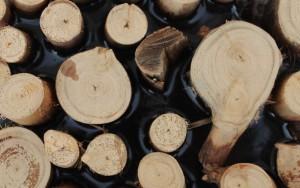 wandpaneele-mix-runde-holzaeste-epoxidharz