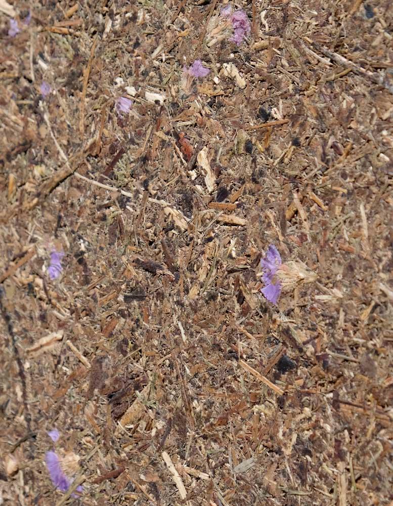 wandpaneele-mix-waldwiese-blumen-gepresst-bluetenzauber-seitlich