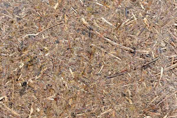 wandpaneele-mix-waldwiese-graeser-lavendel-wiese-forever