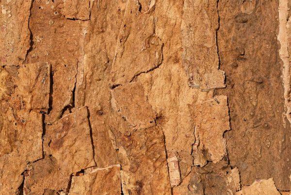 wandpaneele-kork-braun-naturfarben-rough-time