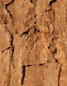 wandpaneele-kork-braun-naturfarben-rough-time-s