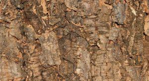 wandpaneele-kork-gruen-braun-naturfarben-macho-bark