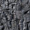 wandpaneele-kork-schwarz-lackiert-dark-angel-s