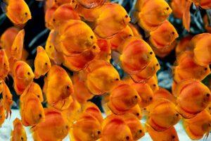 impressionen-wandgestaltung-the-age-of-aquarium-3