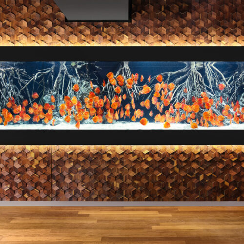 impressionen-wandgestaltung-the-age-of-aquarium-lp